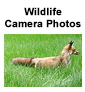 Wildlife Camera Icon